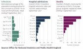 covid_hospitalization by age.png